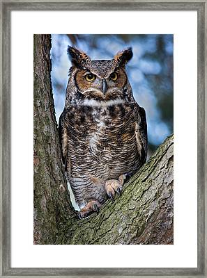 Great Horned Owl Framed Print by Dale Kincaid