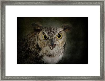 Great Horned Owl Framed Print by Jai Johnson