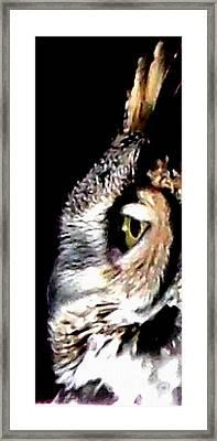 Great Horned Owl Side View Framed Print