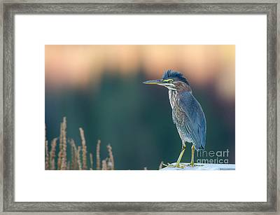Green Against Green Framed Print