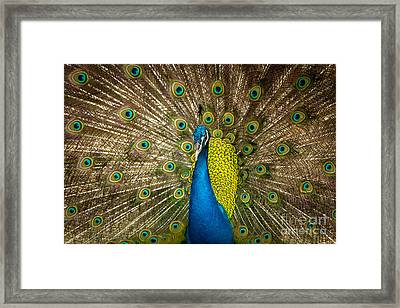 Green Beautiful Peacock Framed Print