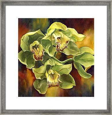 Green Cymbidium Orchid Framed Print by Alfred Ng