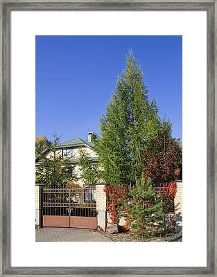 Green Fence Of Trees And Shrubs Framed Print by Aleksandr Volkov