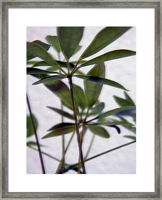 Green Focus Framed Print by Corinne Elizabeth Cowherd