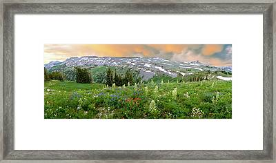 Green Gentian Rise Above Other Framed Print by Panoramic Images