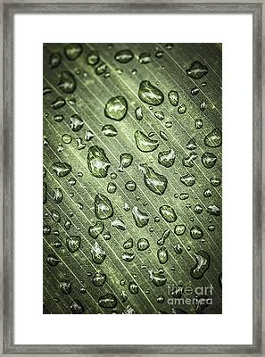 Green Leaf With Raindrops Framed Print by Elena Elisseeva