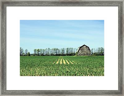 Green Framed Print by Sheryl Burns