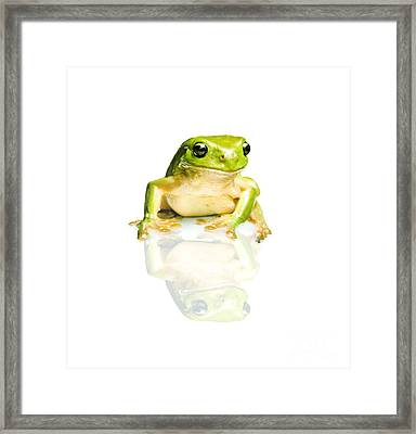 Green Tree Frog Framed Print by Jorgo Photography - Wall Art Gallery
