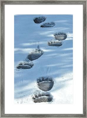 Grizzly Bear Tracks Framed Print
