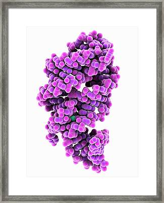 Guanine-responsive Riboswitch Framed Print by Laguna Design