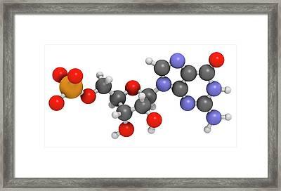 Guanosine Monophosphate Molecule Framed Print by Molekuul