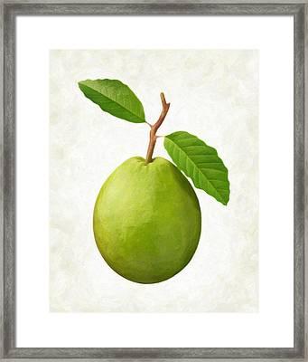 Guava Framed Print by Danny Smythe