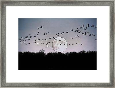 Guided By The Moon Framed Print by Larry Trupp