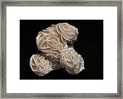 Gypsum Crystals Framed Print by Dirk Wiersma