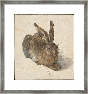 Young Hare Framed Print by Albrecht Durer