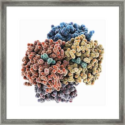 Haemoglobin, Molecular Model Framed Print