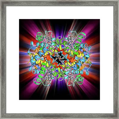Haemoglobin Molecule Framed Print