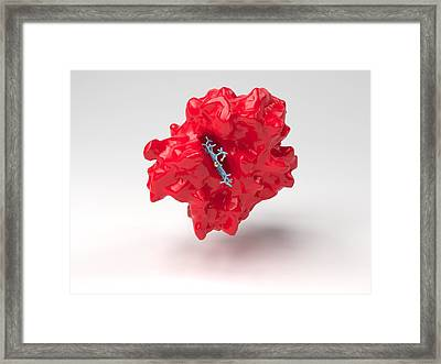 Haemoglobin Molecule Framed Print by Science Photo Library