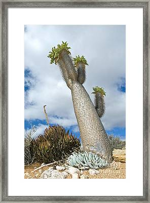 Halfmens Tree Framed Print