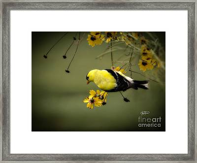 Hang On Framed Print by Cris Hayes