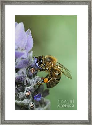 Happy Bee Framed Print by Joy Watson
