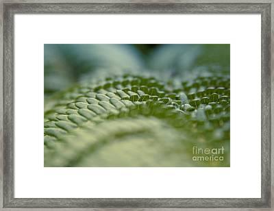 Hapuu II - Hawaiian Tree Fern - Cibotium Menziesii Framed Print