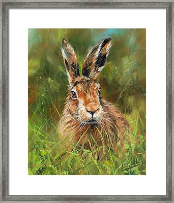 hARE Framed Print by David Stribbling