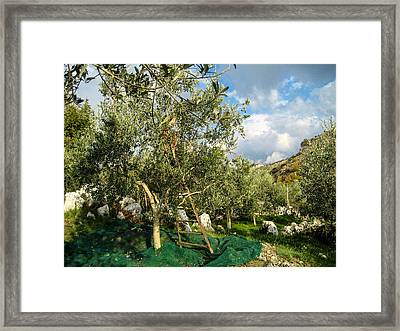 Framed Print featuring the photograph Harvest Day by Dany Lison