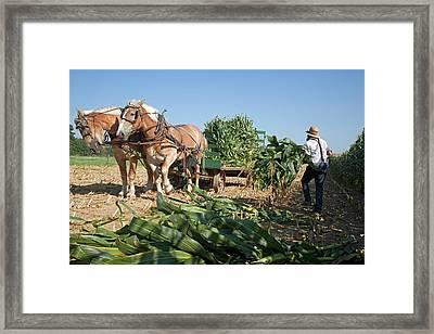 Harvest On An Amish Farm Framed Print by Jim West