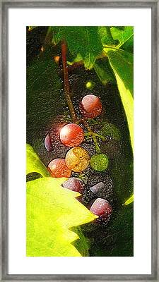 Harvest Time Framed Print by Ron Regalado