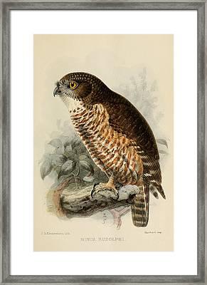 Hawk Owl Framed Print by Rob Dreyer