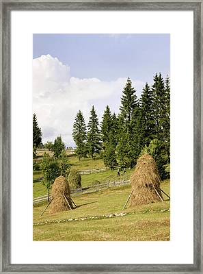 Hay Harvest And Haystack In The Apuseni Framed Print by Martin Zwick