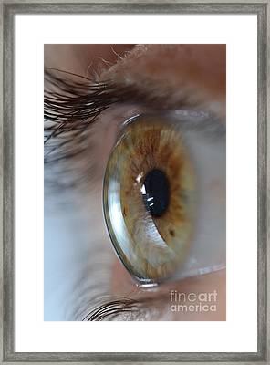 Hazel Eye Framed Print by Photo Researchers, Inc.