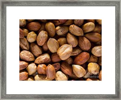 Hazelnuts Framed Print by Sinisa Botas