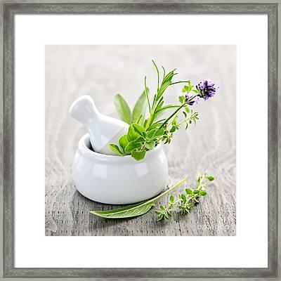 Healing Herbs Framed Print