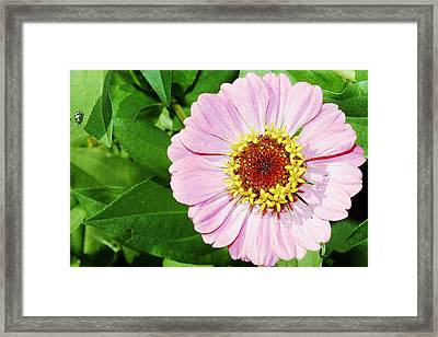 Heart Of Gold Two Framed Print