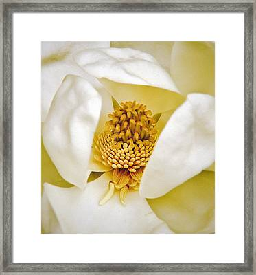 Framed Print featuring the painting Heart Of Magnolia by Debra Crank