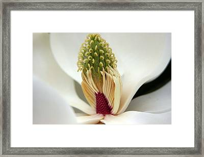 Heart Of The Magnolia Framed Print