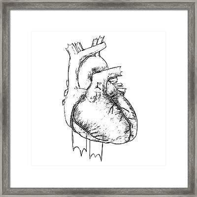 Heart Framed Print by Russell Kightley