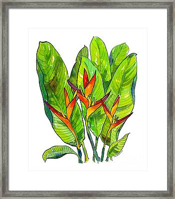 Heliconia Framed Print by Diane Thornton