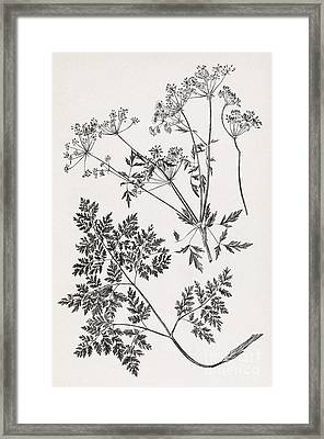 Hemlock, 19th Century Artwork Framed Print by Middle Temple Library