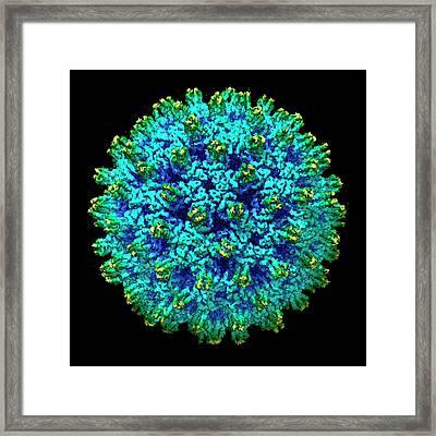 Hepatitis B Virus Framed Print