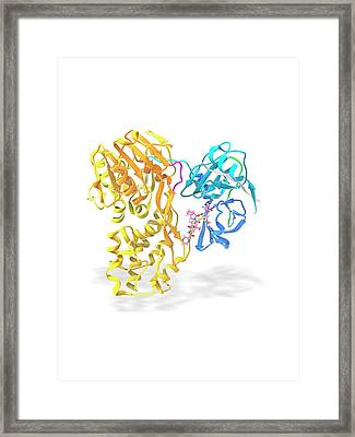 Hepatitis C Proteins And Drug Complex Framed Print by Ramon Andrade 3dciencia