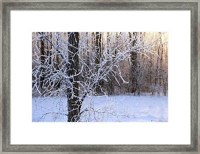 Here Comes The Sun Framed Print by Rachel Cohen