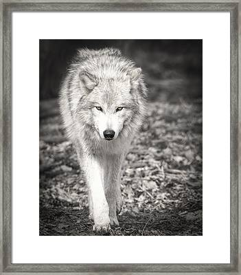 Here's Looking At You Framed Print by Thomas Young