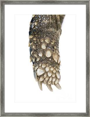 Hermanns Tortoise Leg And Foot Framed Print