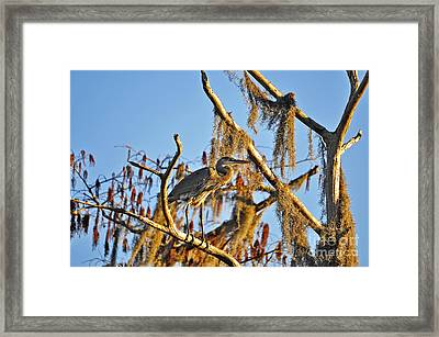 Heron On High Framed Print