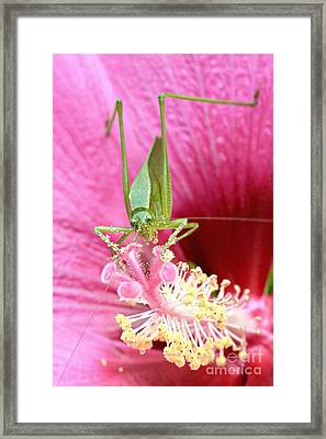 Hibiscus And Friend Framed Print