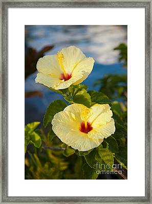 Framed Print featuring the photograph Bright Yellow Hibiscus by Roselynne Broussard