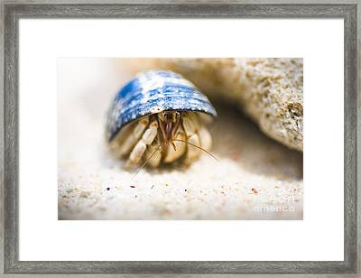 Hiding Hermit Crab Framed Print